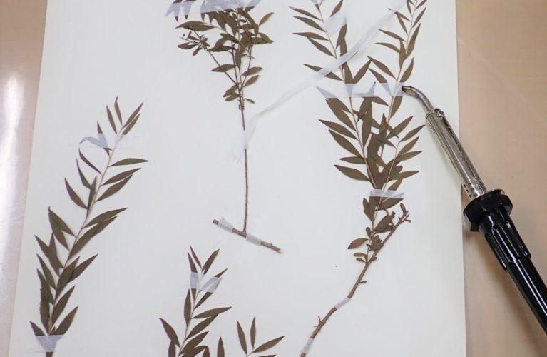 植物標本づくり
